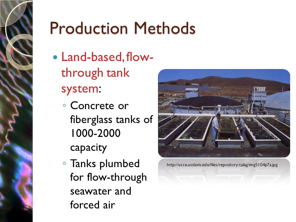 Production Methods Land-based, flow- through tank system: ◦ Concrete or fiberglass tanks of 1000-2000 capacity ◦ Tanks plumbed for flow-through seawater and forced air http://ucce.ucdavis.edu/files/repository/calag/img5104p7a.jpg