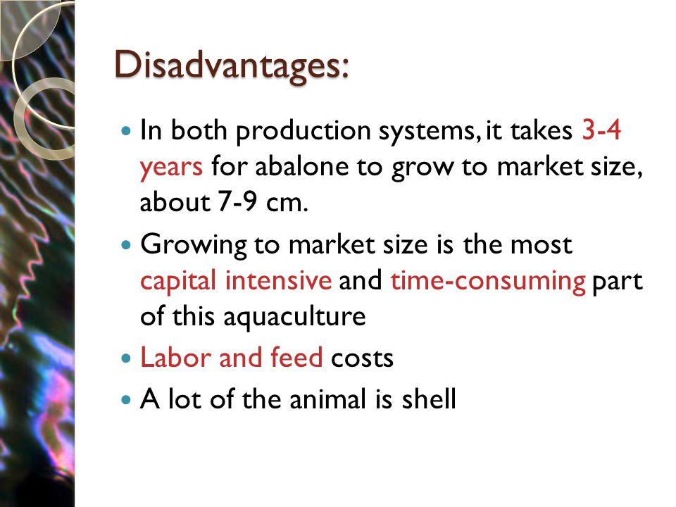Disadvantages: In both production systems, it takes 3-4 years for abalone to grow to market size, about 7-9 cm. Growing to market size is the most cap