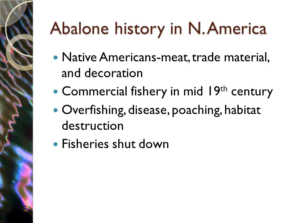 Abalone history in N. America Native Americans-meat, trade material, and decoration Commercial fishery in mid 19 th century Overfishing, disease, poac