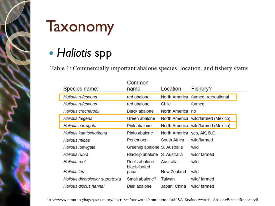 Taxonomy Haliotis spp http://www.montereybayaquarium.org/cr/cr_seafoodwatch/content/media/MBA_SeafoodWatch_AbaloneFarmedReport.pdf