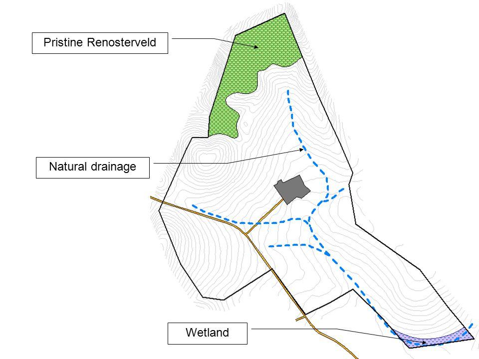 Pristine Renosterveld Wetland Natural drainage