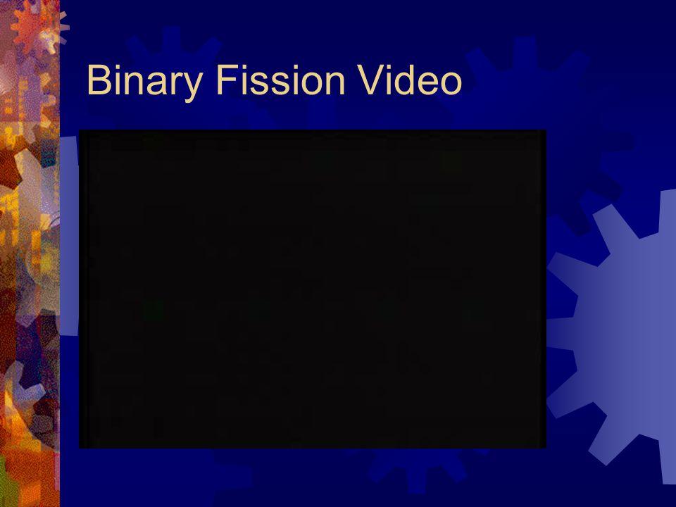 Binary Fission Video