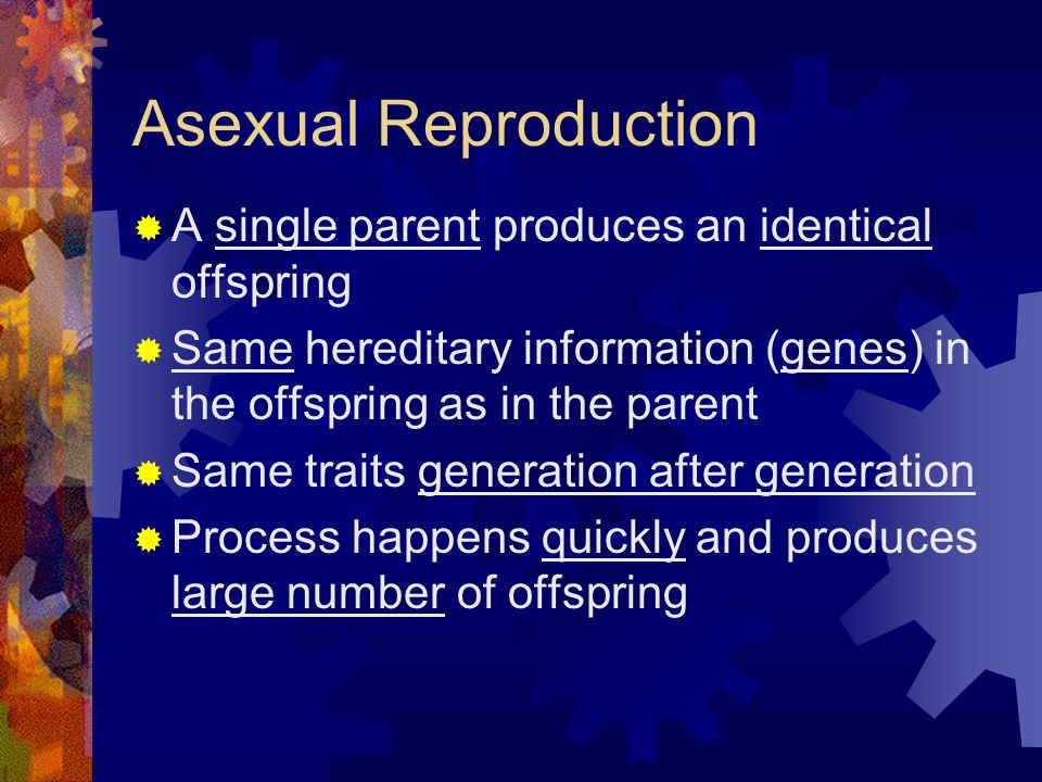 Asexual Reproduction  A single parent produces an identical offspring  Same hereditary information (genes) in the offspring as in the parent  Same traits generation after generation  Process happens quickly and produces large number of offspring