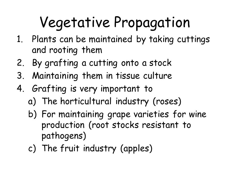 Vegetative Propagation 1.Plants can be maintained by taking cuttings and rooting them 2.By grafting a cutting onto a stock 3.Maintaining them in tissue culture 4.Grafting is very important to a)The horticultural industry (roses) b)For maintaining grape varieties for wine production (root stocks resistant to pathogens) c)The fruit industry (apples)
