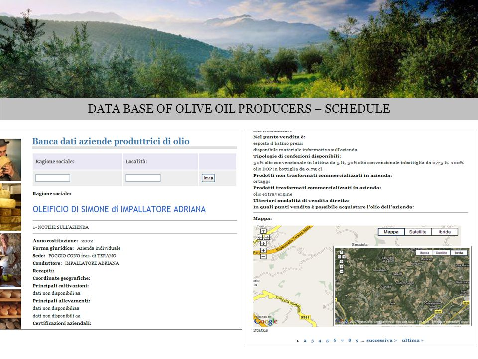 DATA BASE OF OLIVE OIL PRODUCERS – SCHEDULE