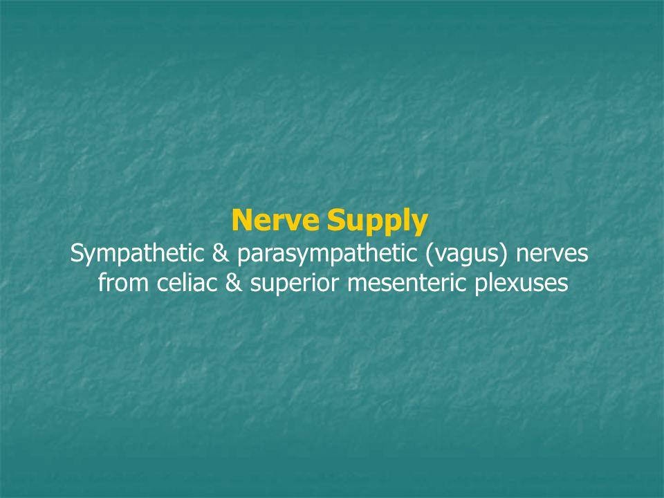 Nerve Supply Sympathetic & parasympathetic (vagus) nerves from celiac & superior mesenteric plexuses