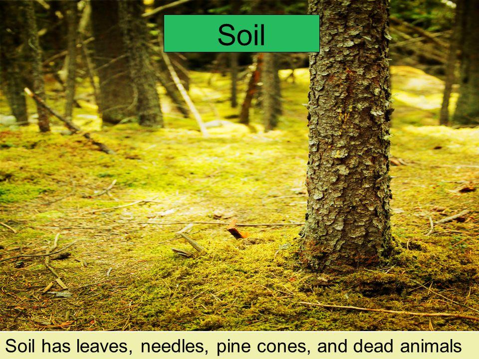 Soil. How is soil used? How is soil useful? What is in soil?