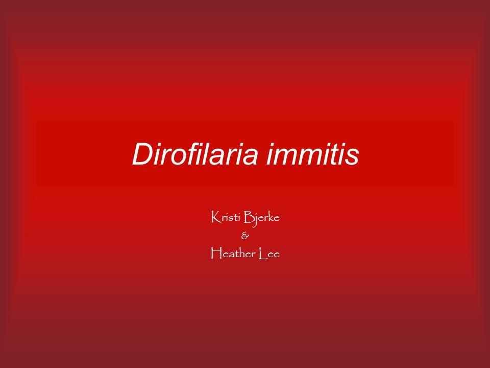 Dirofilaria immitis Kristi Bjerke & Heather Lee