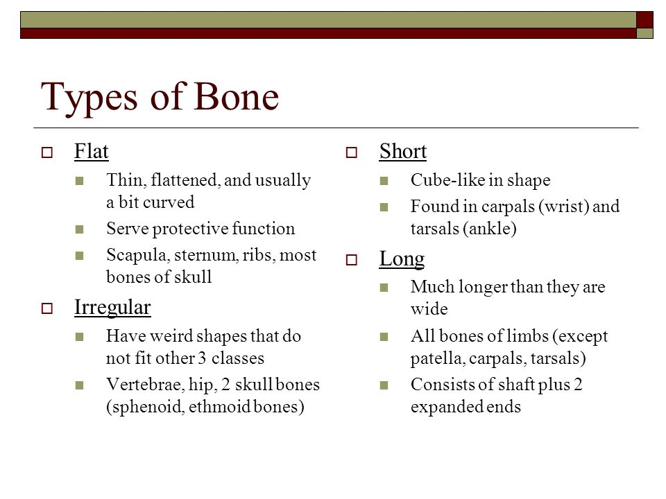 Types of Bone  Flat Thin, flattened, and usually a bit curved Serve protective function Scapula, sternum, ribs, most bones of skull  Irregular Have weird shapes that do not fit other 3 classes Vertebrae, hip, 2 skull bones (sphenoid, ethmoid bones)  Short Cube-like in shape Found in carpals (wrist) and tarsals (ankle)  Long Much longer than they are wide All bones of limbs (except patella, carpals, tarsals) Consists of shaft plus 2 expanded ends