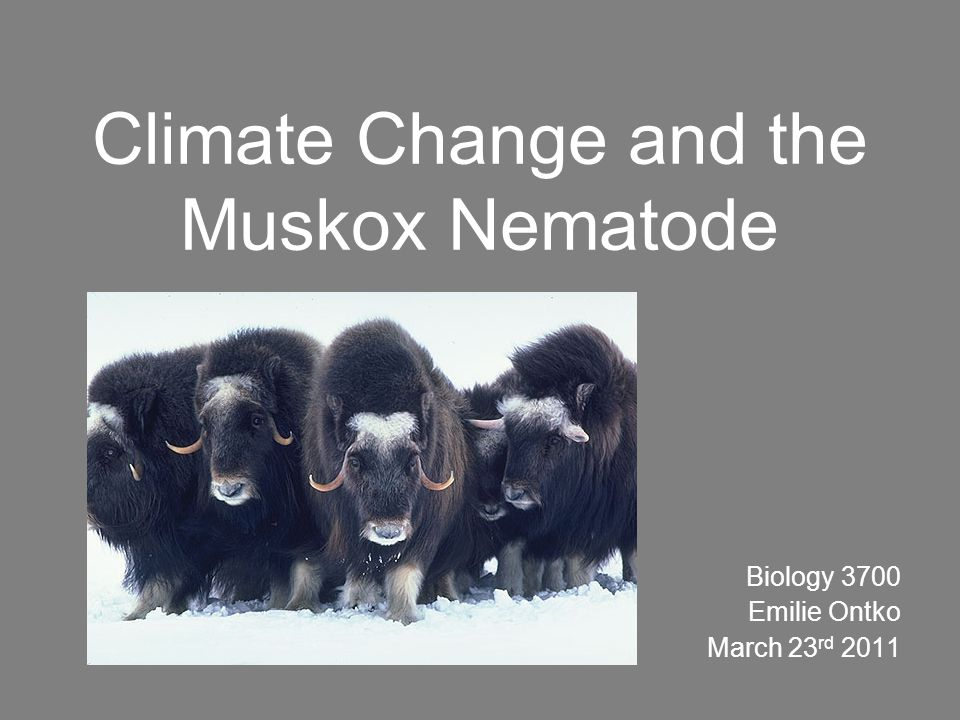 Climate Change and the Muskox Nematode Biology 3700 Emilie Ontko March 23 rd 2011