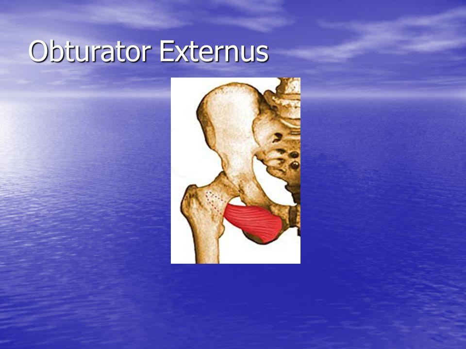 Obturator Externus