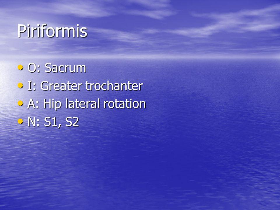 Piriformis O: Sacrum O: Sacrum I: Greater trochanter I: Greater trochanter A: Hip lateral rotation A: Hip lateral rotation N: S1, S2 N: S1, S2