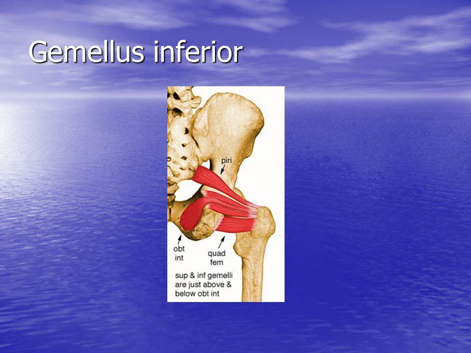 Gemellus inferior