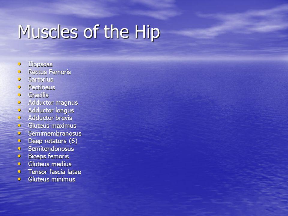 Muscles of the Hip Iliopsoas Iliopsoas Rectus Femoris Rectus Femoris Sartorius Sartorius Pectineus Pectineus Gracilis Gracilis Adductor magnus Adducto