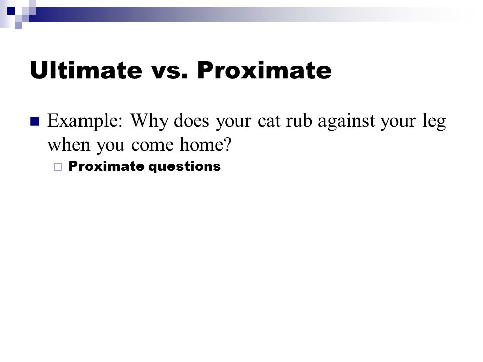 Ultimate vs. Proximate Example: Why does your cat rub against your leg when you come home.