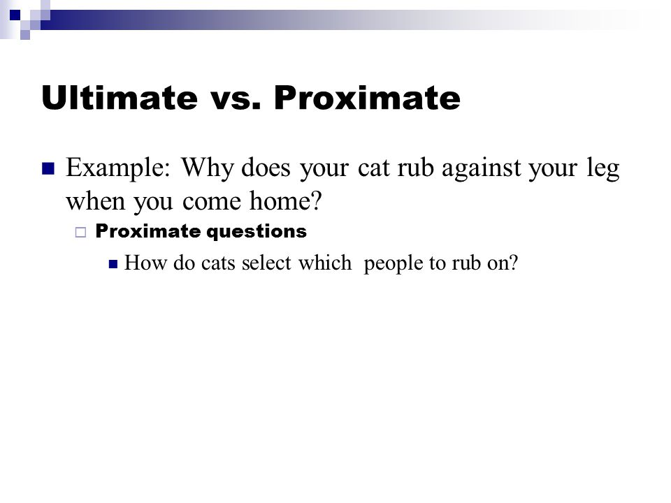 Ultimate vs.Proximate Example: Why does your cat rub against your leg when you come home.