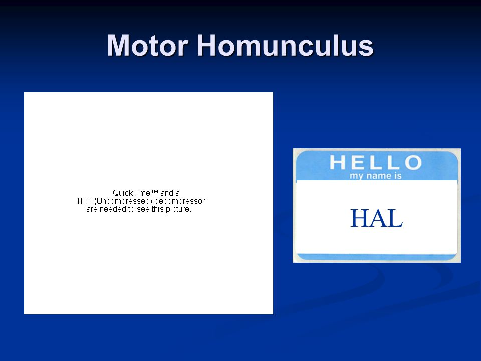 Motor Homunculus HAL
