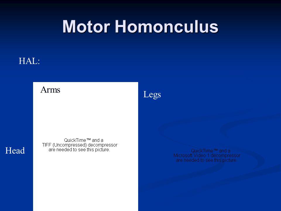 Motor Homonculus Head Arms Legs HAL:
