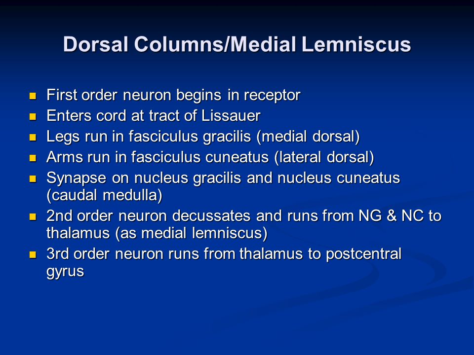 Dorsal Columns/Medial Lemniscus First order neuron begins in receptor First order neuron begins in receptor Enters cord at tract of Lissauer Enters cord at tract of Lissauer Legs run in fasciculus gracilis (medial dorsal) Legs run in fasciculus gracilis (medial dorsal) Arms run in fasciculus cuneatus (lateral dorsal) Arms run in fasciculus cuneatus (lateral dorsal) Synapse on nucleus gracilis and nucleus cuneatus (caudal medulla) Synapse on nucleus gracilis and nucleus cuneatus (caudal medulla) 2nd order neuron decussates and runs from NG & NC to thalamus (as medial lemniscus) 2nd order neuron decussates and runs from NG & NC to thalamus (as medial lemniscus) 3rd order neuron runs from thalamus to postcentral gyrus 3rd order neuron runs from thalamus to postcentral gyrus