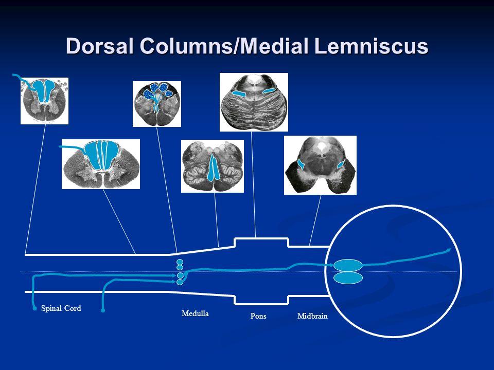 Dorsal Columns/Medial Lemniscus Spinal Cord Medulla PonsMidbrain