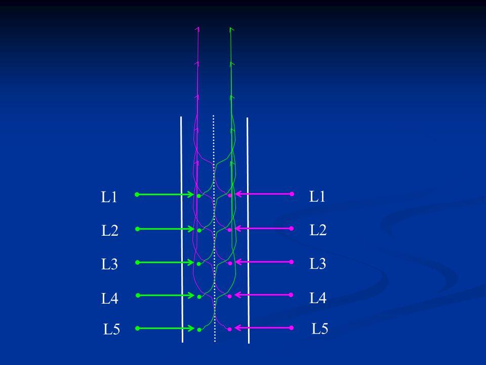 L1 L2 L3 L4 L5 L1 L2 L3 L4 L5