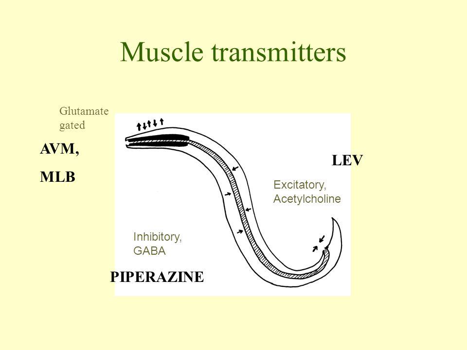 Muscle transmitters Excitatory, Acetylcholine Inhibitory, GABA Glutamate gated LEV PIPERAZINE AVM, MLB