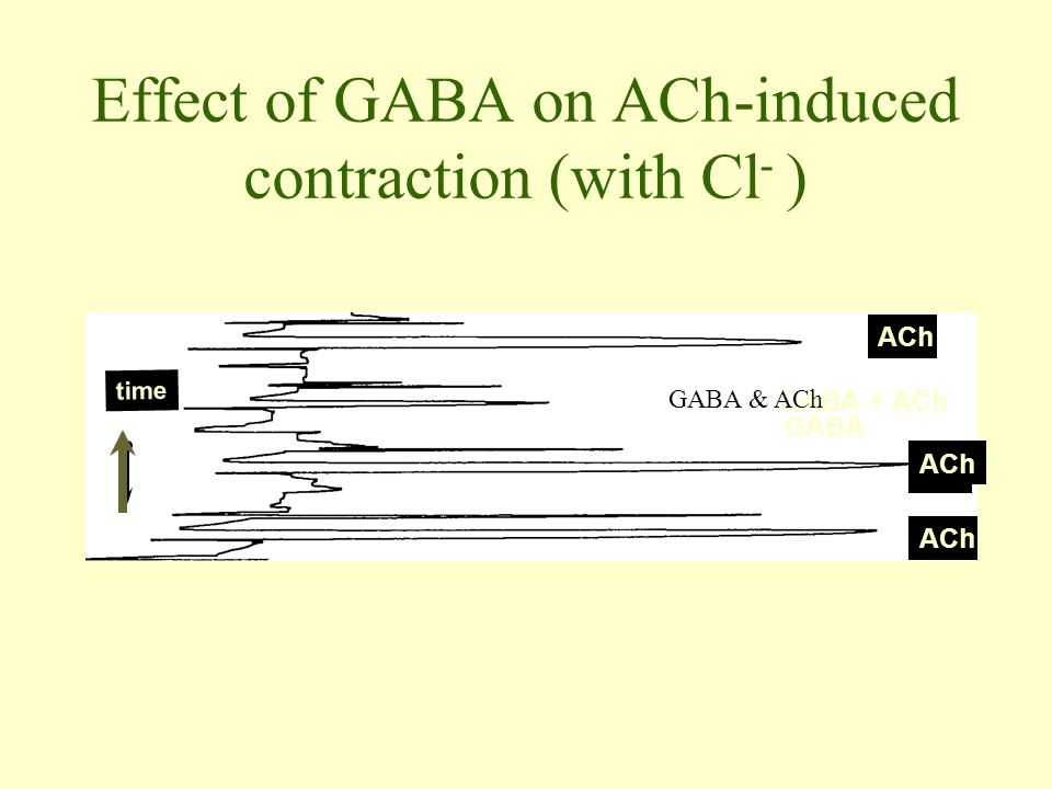 Effect of GABA on ACh-induced contraction (with Cl - ) ACh time ACh GABA ACh GABA + ACh GABA & ACh