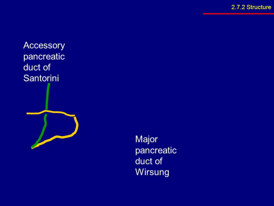 Major pancreatic duct of Wirsung Accessory pancreatic duct of Santorini 2.7.2 Structure