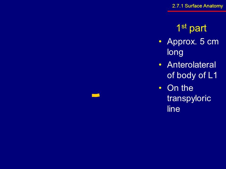 3 unpaired to viscera (anterior) –Coeliac trunk –Sup.
