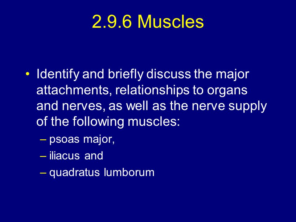 2.9.6 Muscles Identify and briefly discuss the major attachments, relationships to organs and nerves, as well as the nerve supply of the following mus