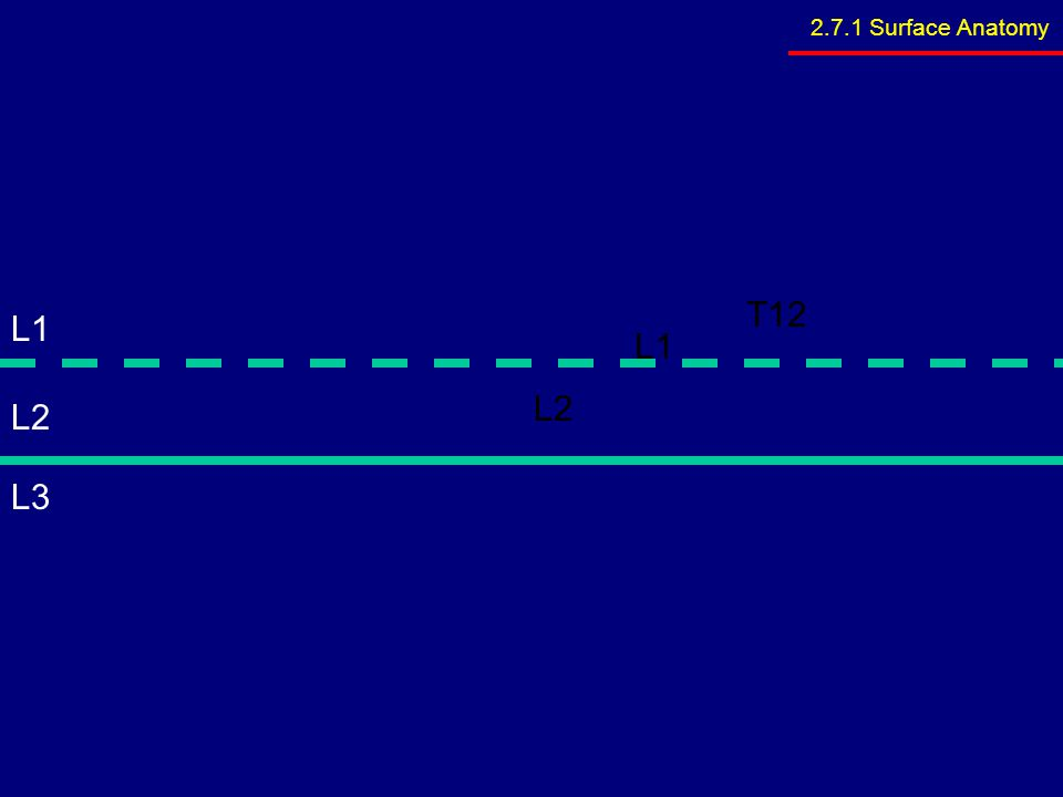 Innervation –Motor supply ~ phrenic nerve Blood supply ~ superior –Superior phrenic artery (thoracic aorta) –Musculophrenic and pericardiophrenic arteries(internal thoracic artery) Blood supply ~ inferior –Inferior phrenic artery (abdominal aorta) 2.9.7 Diaphragm