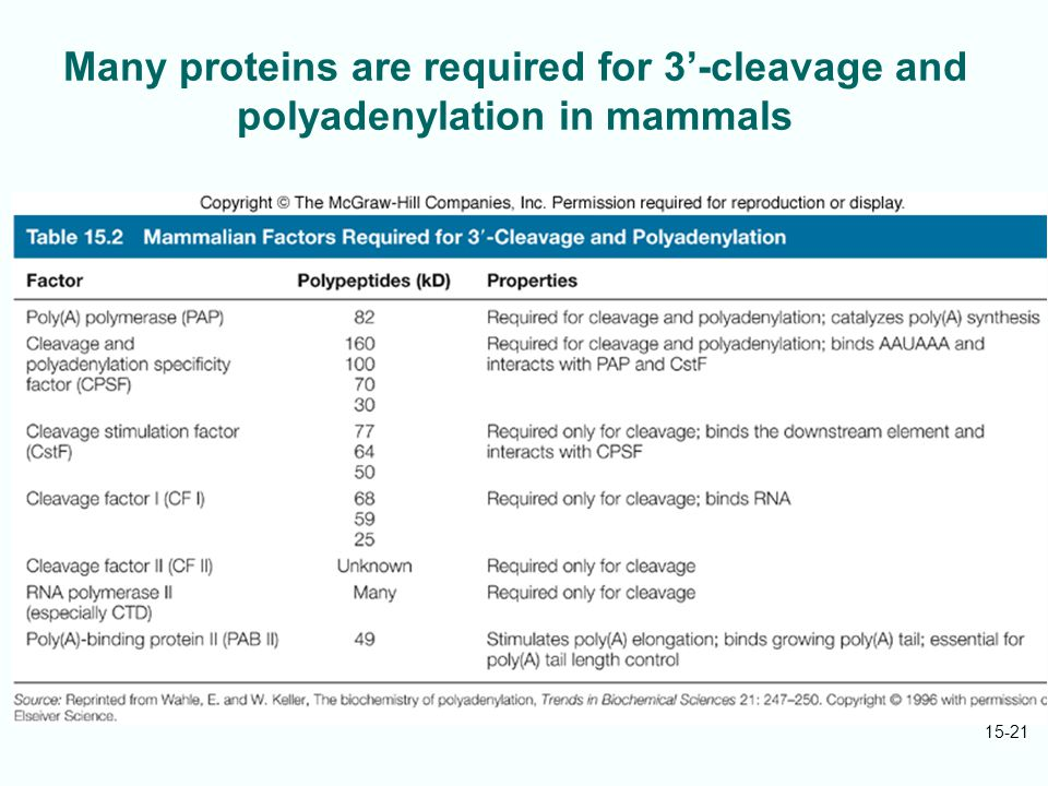 Many proteins are required for 3'-cleavage and polyadenylation in mammals 15-21