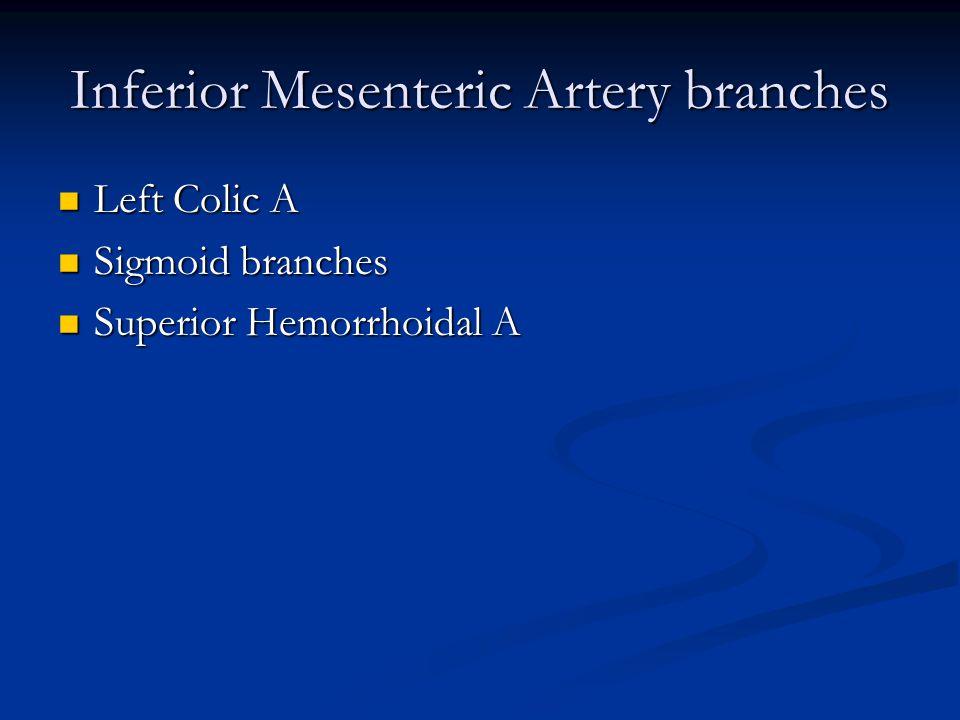 Inferior Mesenteric Artery branches Left Colic A Left Colic A Sigmoid branches Sigmoid branches Superior Hemorrhoidal A Superior Hemorrhoidal A