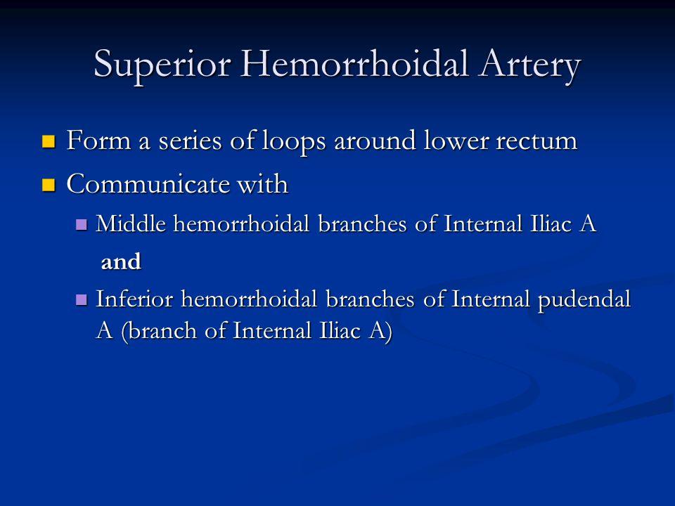 Superior Hemorrhoidal Artery Form a series of loops around lower rectum Form a series of loops around lower rectum Communicate with Communicate with Middle hemorrhoidal branches of Internal Iliac A Middle hemorrhoidal branches of Internal Iliac A and and Inferior hemorrhoidal branches of Internal pudendal A (branch of Internal Iliac A) Inferior hemorrhoidal branches of Internal pudendal A (branch of Internal Iliac A)
