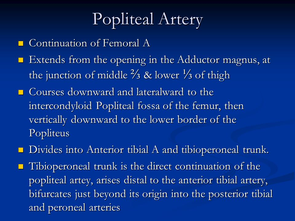 Popliteal Artery Continuation of Femoral A Continuation of Femoral A Extends from the opening in the Adductor magnus, at the junction of middle ⅔ & lower ⅓ of thigh Extends from the opening in the Adductor magnus, at the junction of middle ⅔ & lower ⅓ of thigh Courses downward and lateralward to the intercondyloid Popliteal fossa of the femur, then vertically downward to the lower border of the Popliteus Courses downward and lateralward to the intercondyloid Popliteal fossa of the femur, then vertically downward to the lower border of the Popliteus Divides into Anterior tibial A and tibioperoneal trunk.