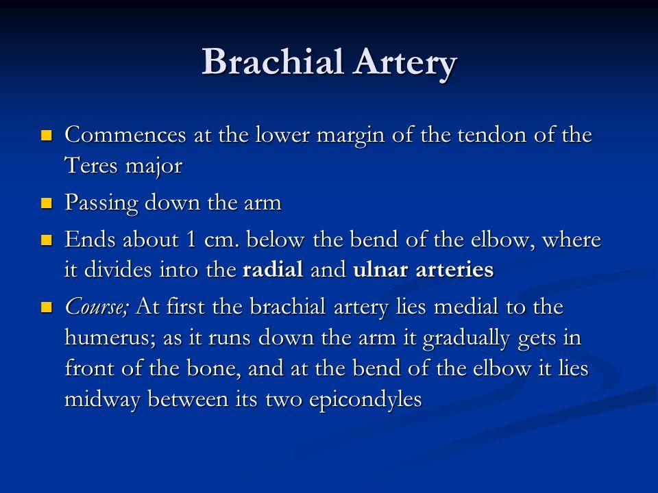 Brachial Artery Commences at the lower margin of the tendon of the Teres major Commences at the lower margin of the tendon of the Teres major Passing down the arm Passing down the arm Ends about 1 cm.