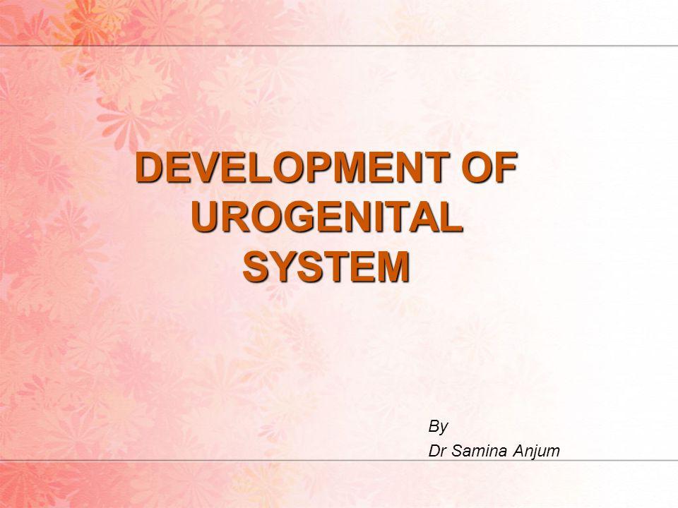 DEVELOPMENT OF UROGENITAL SYSTEM By Dr Samina Anjum
