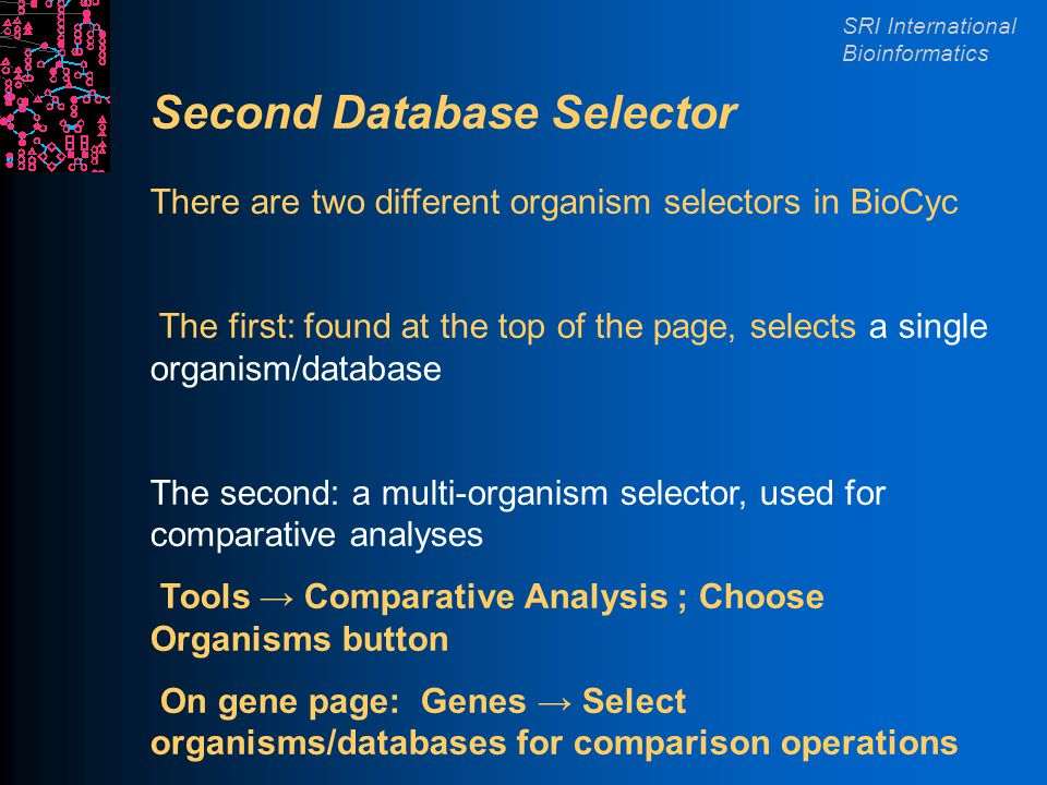 SRI International Bioinformatics Second Database Selector There are two different organism selectors in BioCyc The first: found at the top of the page