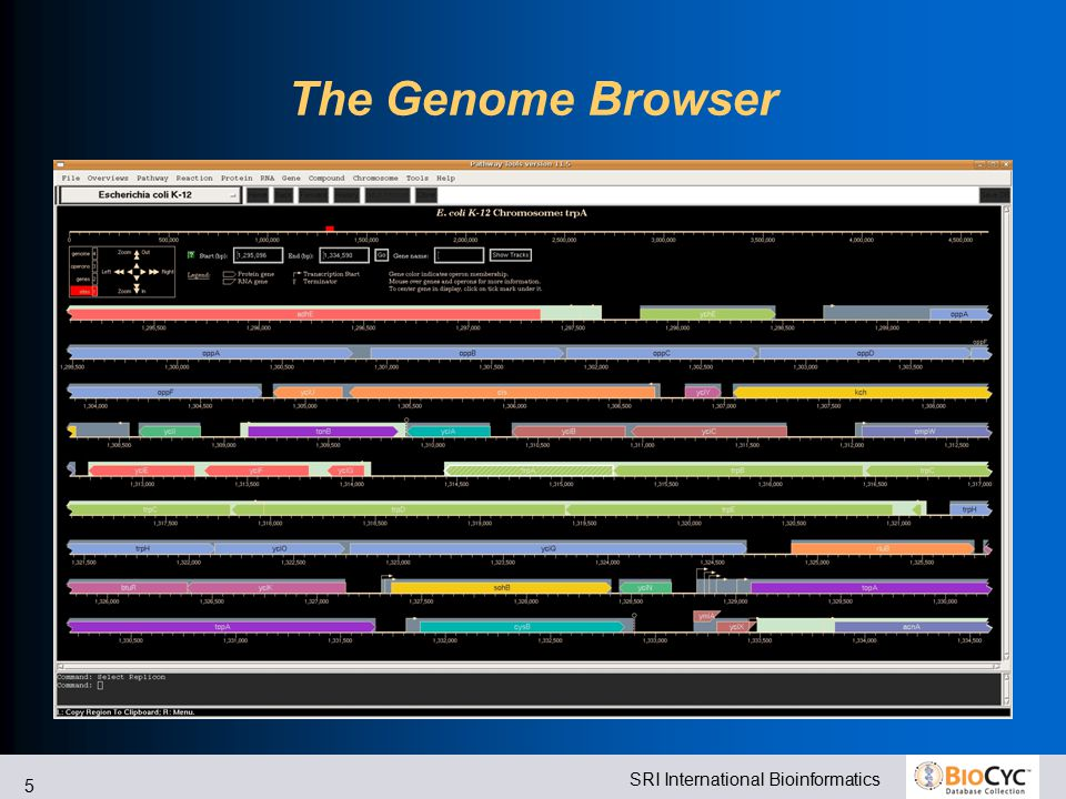 SRI International Bioinformatics 5 The Genome Browser