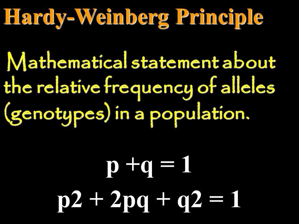  Hardy-Weinberg Theorem remember: H.W.
