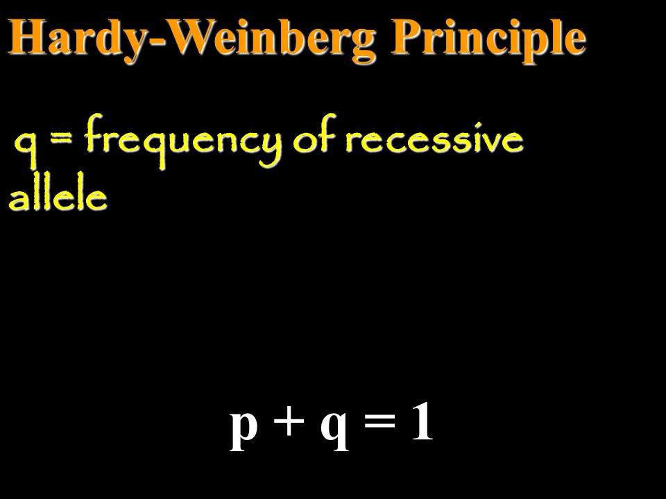 Hardy-Weinberg Principle p + q = 1 p = frequency of dominant allele