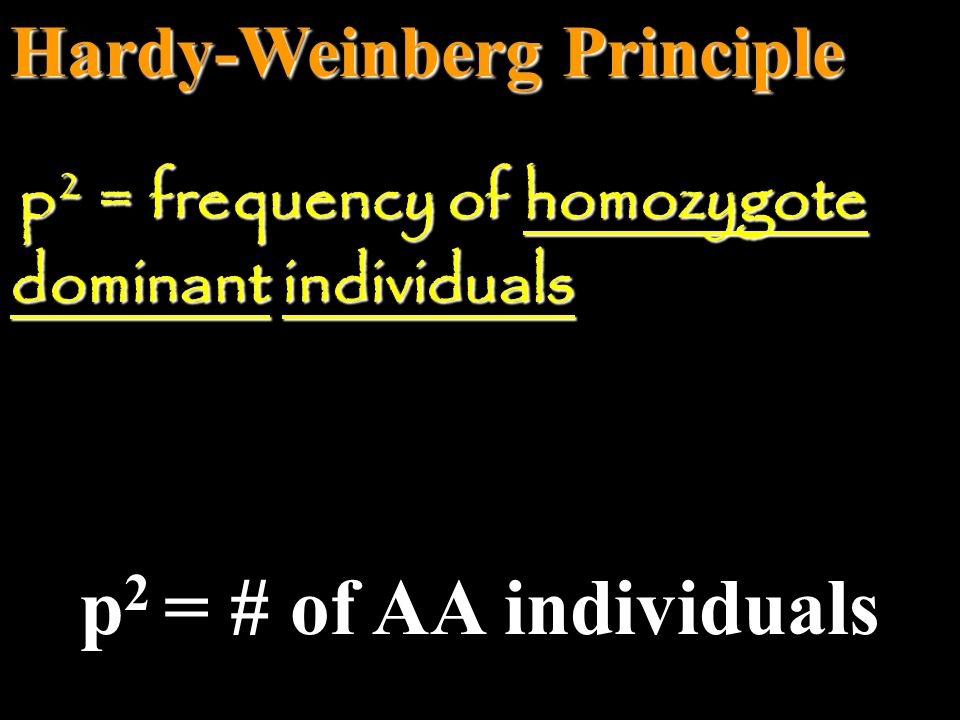 Hardy-Weinberg Principle q 2 = # of aa individuals q 2 = frequency of homozygote recessive individuals