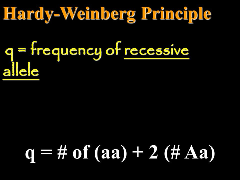 Hardy-Weinberg Principle p = # of (AA) + 2 (# Aa) p = frequency of dominant allele