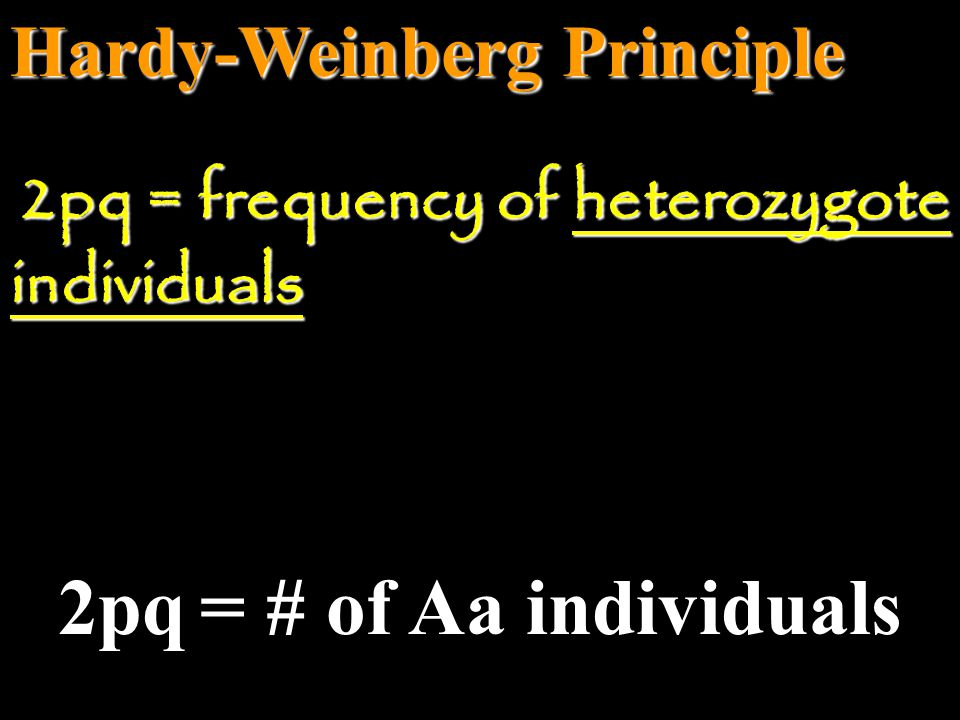 Hardy-Weinberg Principle q = # of (aa) + 2 (# Aa) q = frequency of recessive allele