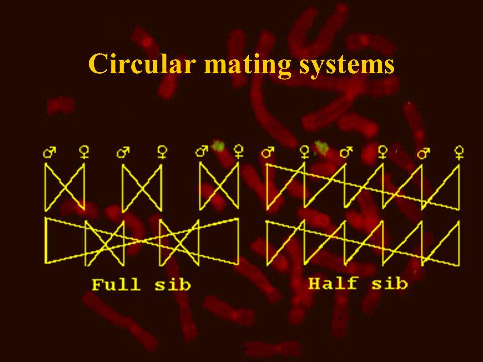 Circular mating systems