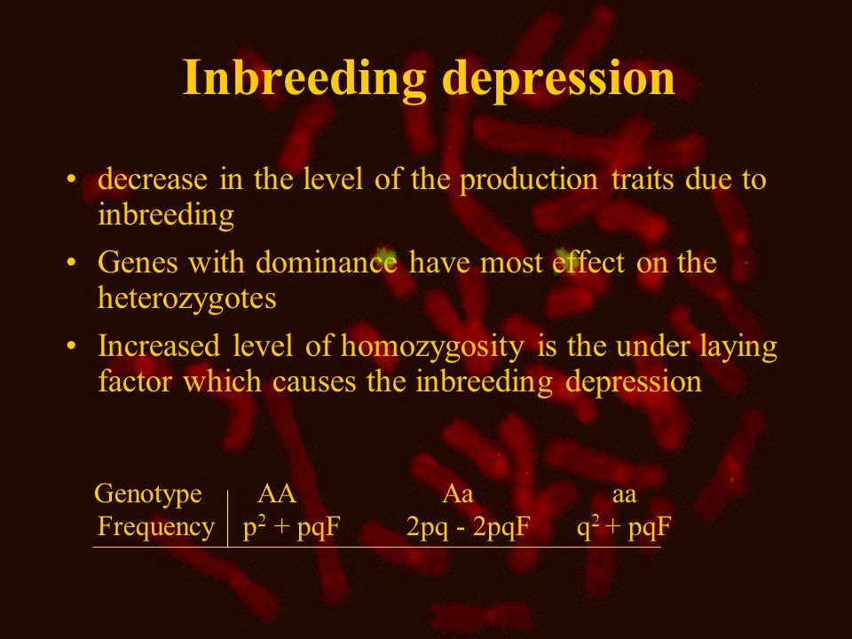 Inbreeding depression decrease in the level of the production traits due to inbreeding Genes with dominance have most effect on the heterozygotes Increased level of homozygosity is the under laying factor which causes the inbreeding depression Genotype AA Aa aa Frequency p 2 + pqF 2pq - 2pqF q 2 + pqF