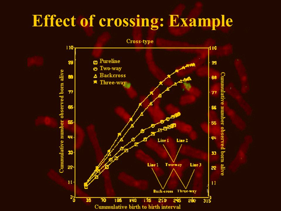 Effect of crossing: Example