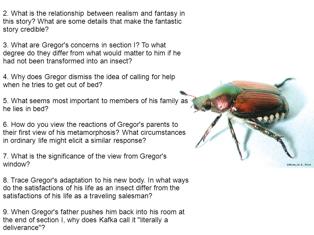 2. What is the relationship between realism and fantasy in this story? What are some details that make the fantastic story credible? 3. What are Grego