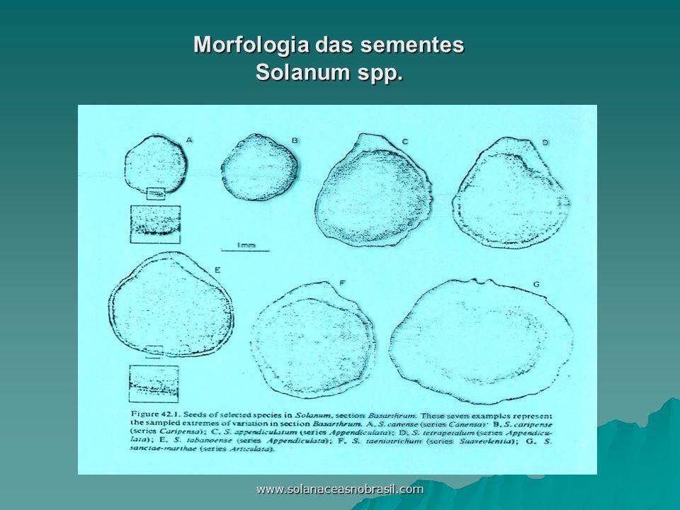 www.solanaceasnobrasil.com Morfologia das sementes Solanum spp.