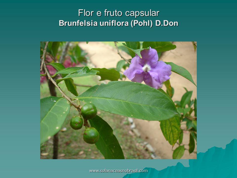 www.solanaceasnobrasil.com Flor e fruto capsular Brunfelsia uniflora (Pohl) D.Don